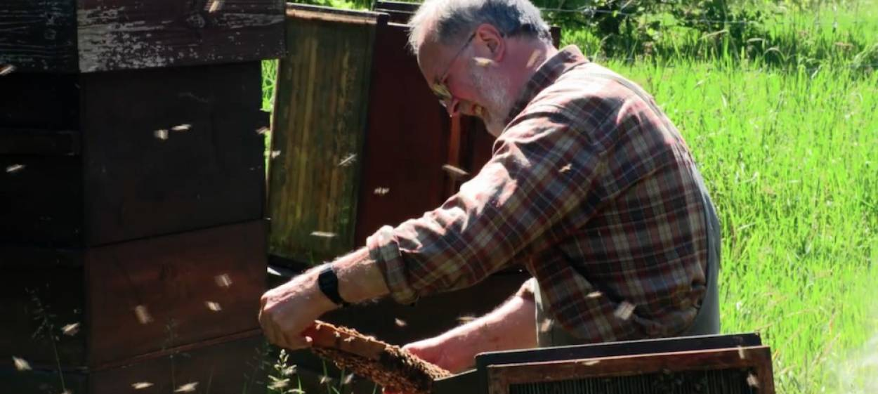 AT THE EDGE - BEEKEEPERS IN MECKLENBURG