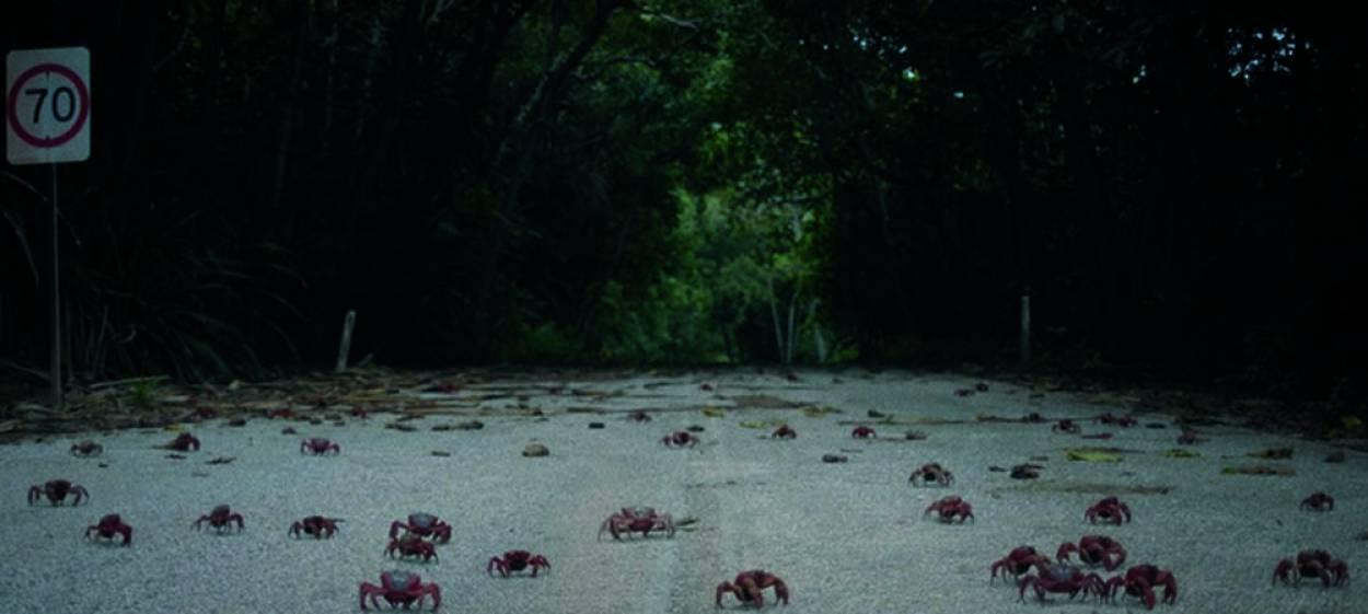 ISLAND OF THE HUNGRY GHOST
