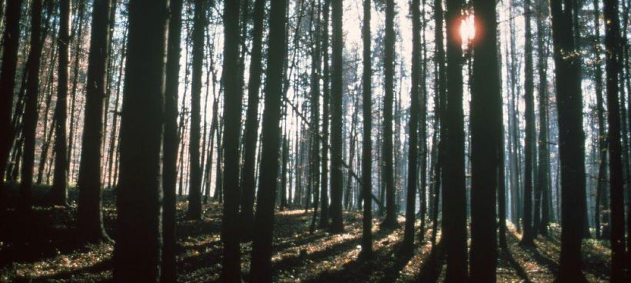Northern Woods