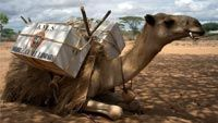 CARAVANE OF THE BOOKS - Kenya's Camel Library