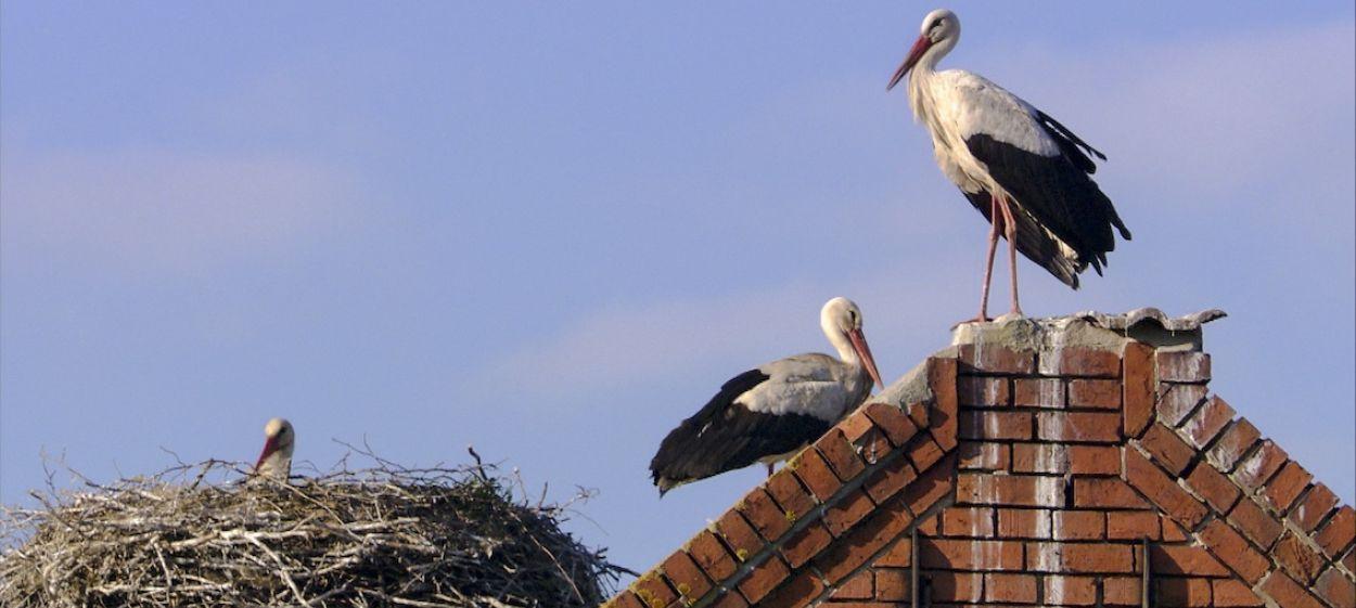 Storks - A Village Rooftop Saga