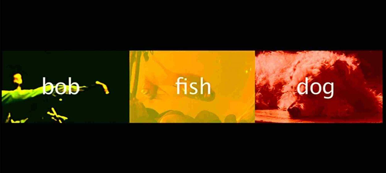 bob, fish and dog