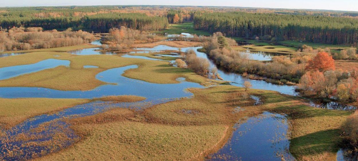 Matsalu Moose – Wild Giants of the Baltics