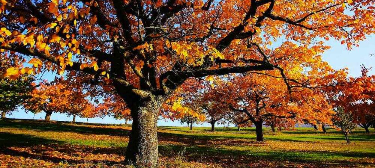 Autumn - World of Colours