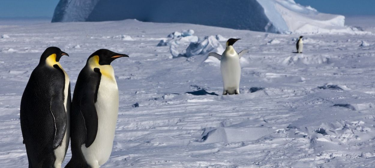 Antarctica – Tales from the End of the World