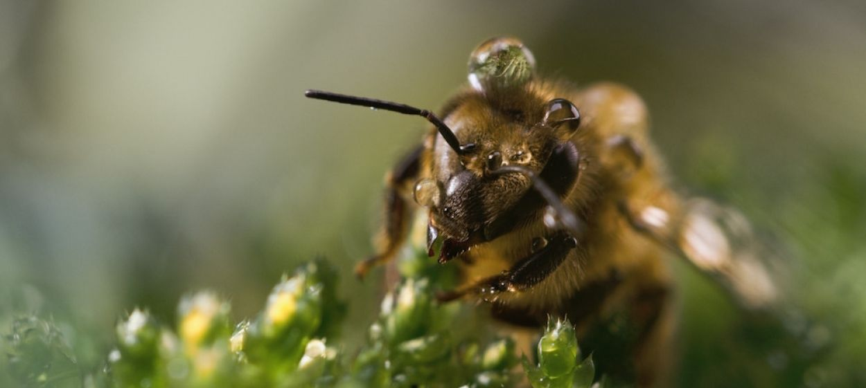 A Bee's Diary