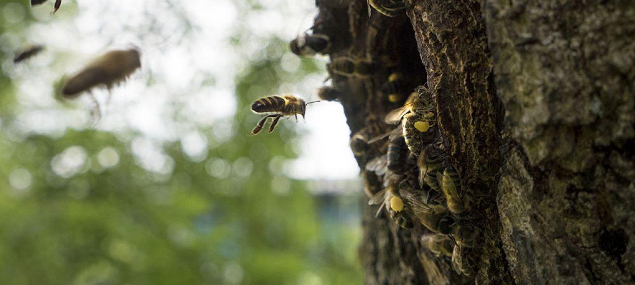 Beewildered Companions