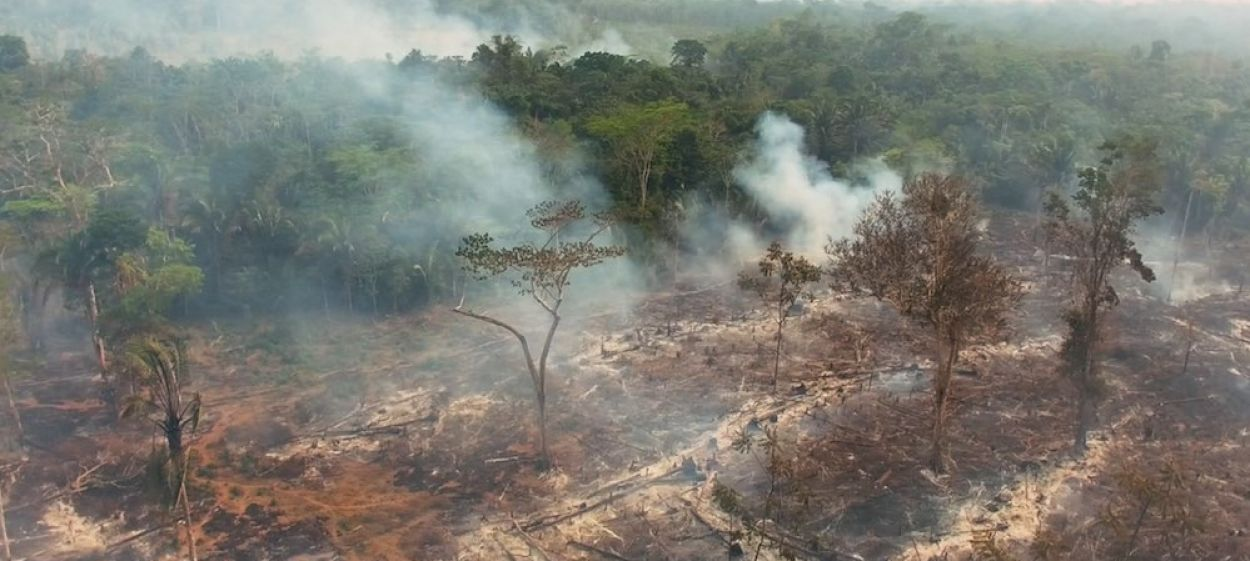 The Amazon on the Brink